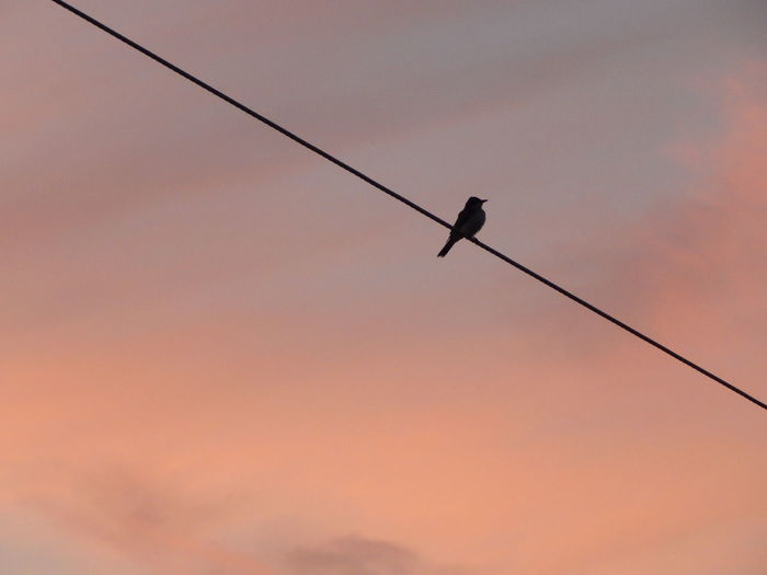Alone Alone Bird Alone In The Dark Alone Time Animal Themes Animal Wildlife Animals In The Wild Bird Cottencandy Day Divided Sky Lone Low Angle View Nature No People One Animal Outdoors Perching Pink Skies Polson Silhouette Silhouette Single Flower Single Object Sky Sunset Miles Away EyeEmNewHere