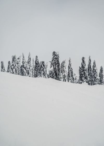Snow Covered Snow Covered Landscape Minimal Landscape Minimal Nature Minimalist Mountain Range Winter Day Snow Cold Temperature Winter Plant Tree Beauty In Nature Nature Land Sky Environment Tranquility Scenics - Nature Day Tranquil Scene No People Field Landscape White Color Non-urban Scene Coniferous Tree