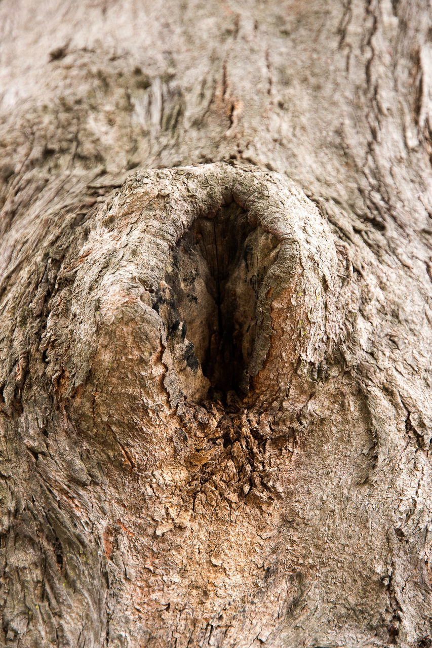 textured, no people, day, nature, wood - material, outdoors, close-up, tree trunk, tree