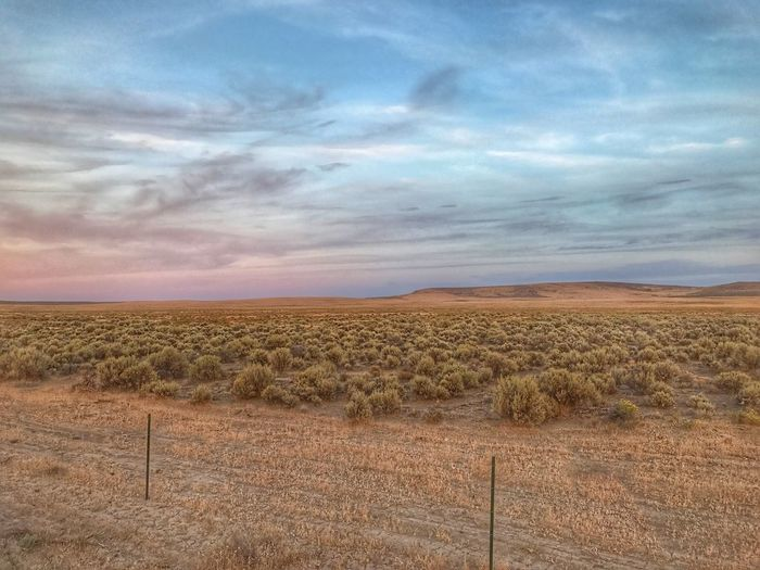 Small Sagebrush plants in a huge field in eastern Oregon Premium Collection Landscape Field Sky Tranquility Tranquil Scene Cloud - Sky Nature Day Outdoors Scenics Rural Scene No People Beauty In Nature