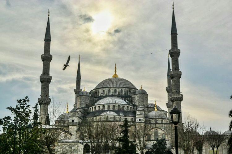 Taking flight Bluemosque Sultanahmetcamii Sultanahmetmosque Birds Light Mosque Turkey Istanbul Fatih Travel