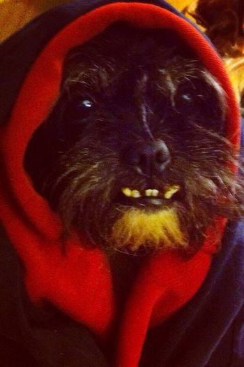 My Dog Falcore is so Uglycute Overbit My Dogs Are Cooler Than Your Kids The Fashionist - 2015 EyeEm Awards
