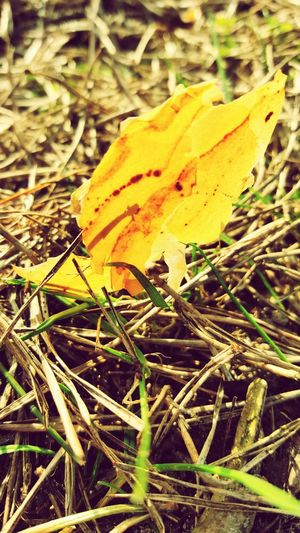 Ein Stück Rinde Nature Close-up No People Outdoors Day Grass Yellow Beauty In Nature Outdoor Little Things