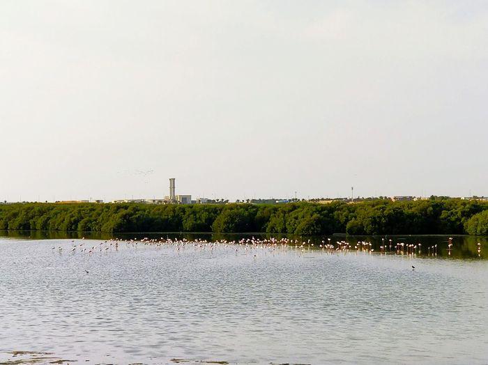 Flamingo Sky Nature LINE City