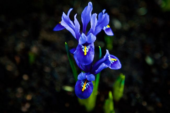 1st Iris Beauty In Nature Eye Flower Eye For Photography Eye4photography  Eyem Nature Lovers  Flower Flower Head Fragility Freshness Growth Nature No People Petal Plant Purple