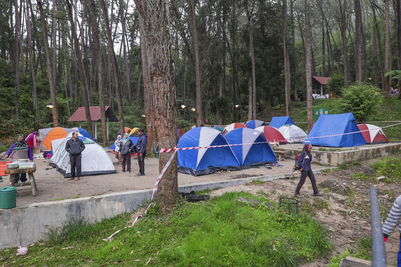 tree, camping, tent, real people, men, leisure activity, outdoors, nature, walking, shelter, forest, day, lifestyles, women, grass, large group of people, scenery, people, adult