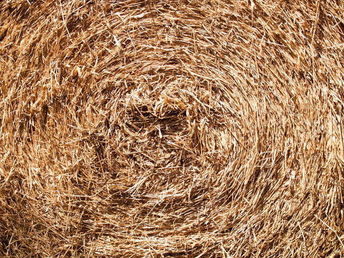 Hay Abstract