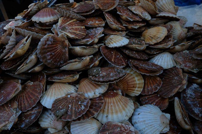 Christmas Market Market Peche Seafood Fishing Full Frame Scallop Shell Sea Shell
