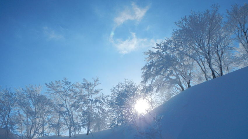 雪景色 Snow Snowscape Bluesky Blue Tree Nature Beauty In Nature Mountain Rime Sky No People Silhouette Branch Day Outdoors Close-up 冬 雪景色 北海道 ニセコ 青空 雪