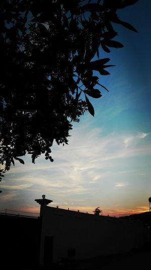 Silhouette Tree Sky Sunset Beauty In Nature Galaxy Dramatic Sky تصويري  صباح_الخير عدستي الطائف مساء الخير  مدينتي الآن Good Night Coffee وبس والله