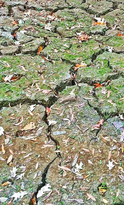 Cracked Mud Mud Dried Mud Moss Green Moss Dried Moss Ground Dirt Backgrounds Nature Photography Nature_collection Beauty In Nature Cracks Outdoor Photography Spaces Textures And Surfaces Rough Texture Rough Background Green Earth Dried Earth Cracks In The Road Muddy Mississippi