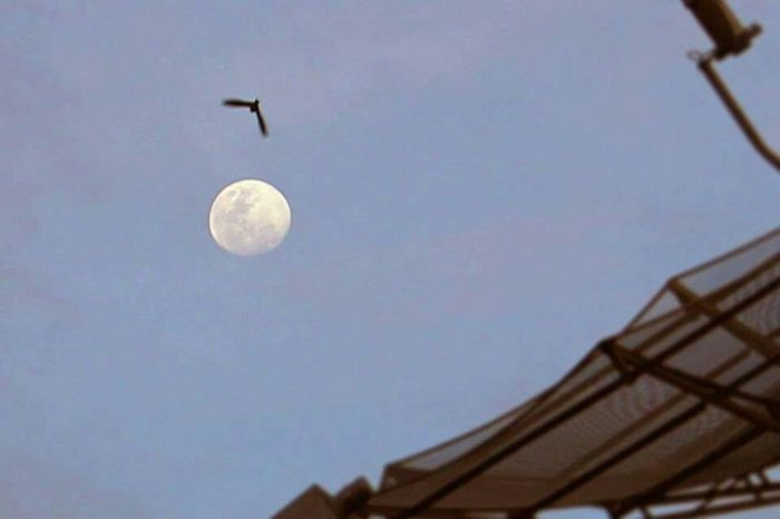 Moon Moonlight Moon Shots Bird Photography First Eyeem Photo Nightfall The Moon