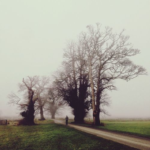 Bare trees on field in foggy weather