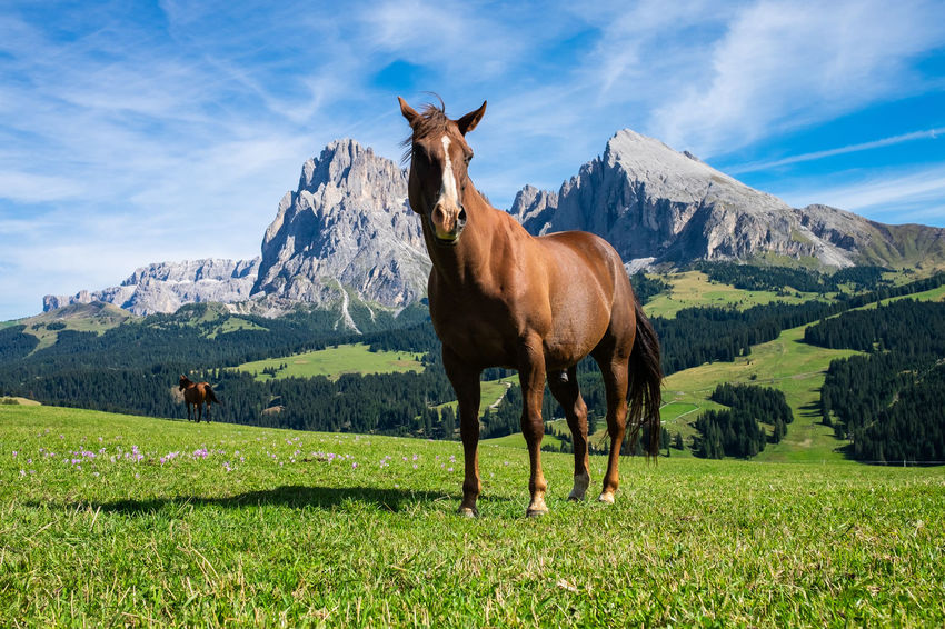 The Italian Stallion Animal Animal Themes Animal Wildlife Cloud - Sky Domestic Domestic Animals Field Grass Herbivorous Horse Land Landscape Livestock Mammal Mountain Mountain Range Nature No People Outdoors Pets Plant Sky Standing Vertebrate