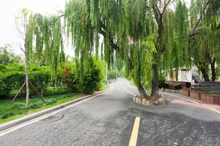 A tree in the middle of a cycling track in Xichang, China Asphalt Bicycle Track Nature No People Outdoors Road Street The Way Forward Transportation Tree