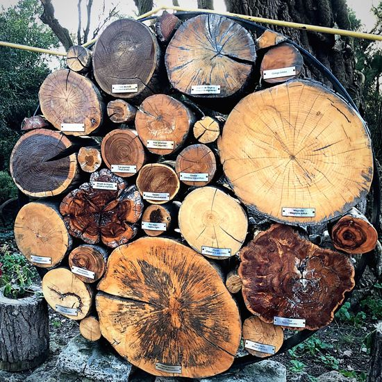Trees Timber Log Wood Firewood Lumber Industry Deforestation Wood - Material Tree Forest Stack Full Frame Day Nature Pattern No People
