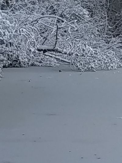 Frozen Snow Frozenpond Treedown No People Nature Day Outdoors Cold Temperature