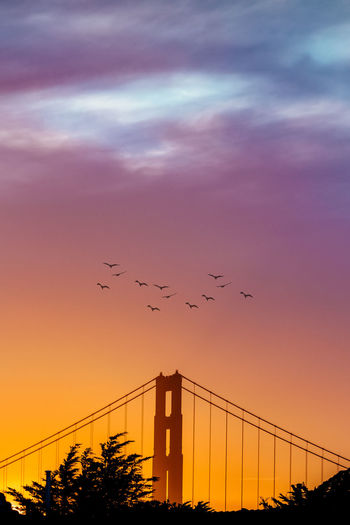 Low angle view of silhouette birds flying against sky at sunset