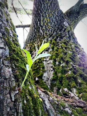 Tree Trunk Tree Nature Growth Day Low Angle View Outdoors No People Forest Leaf Beauty In Nature Close-up