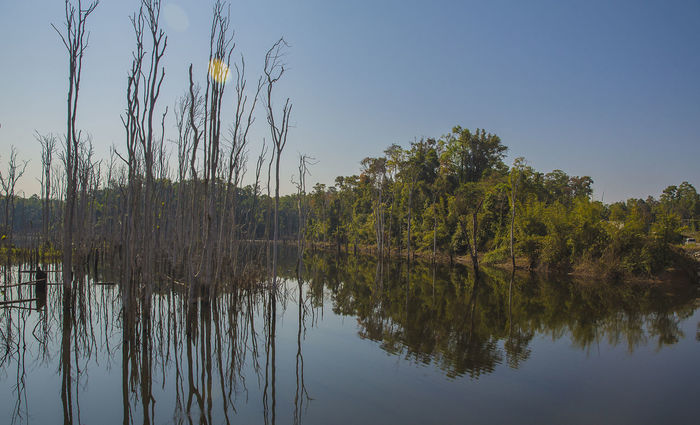 Dead trees in a flooded plain Blue Sky Day Dead Trees Flooded Landscape Floods Lake Laos Nature No People Outdoors Reflection Sky Still Thakhek Loop, Loas Tranquil Scene Tranquility Tree Trees In Water Water