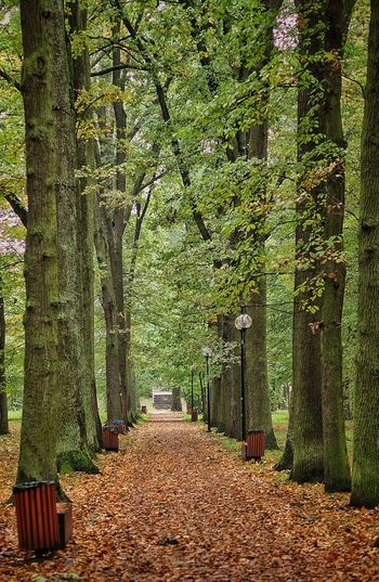 Autumn Leaves Autumn Beauty In Nature Change Day Diminishing Perspective Direction Footpath Green Color Growth Land Leaves Nature No People Outdoors Park The Way Forward Tranquil Scene Tranquility Tree Tree Trunk Treelined Trunk WoodLand Zwierzyniec