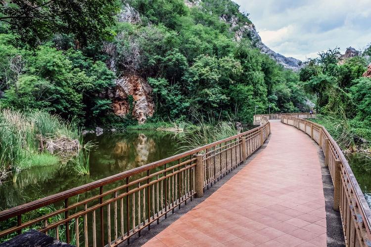 Footbridge over footpath amidst trees