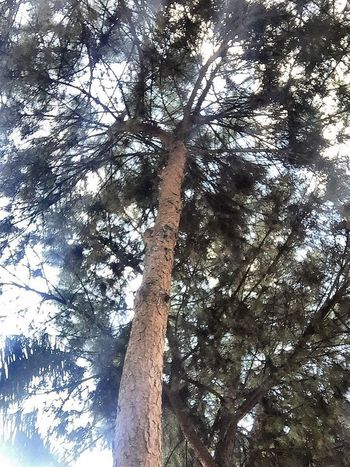 Live For The Story Tree Low Angle View Tree Trunk Day Nature Outdoors Branch Forest Growth Beauty In Nature Tranquility No People Sunlight Sky Turkey