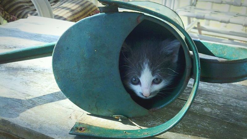 Watering Can Kitten Hiding Out Hiding Place Hiding Cat Cat♡
