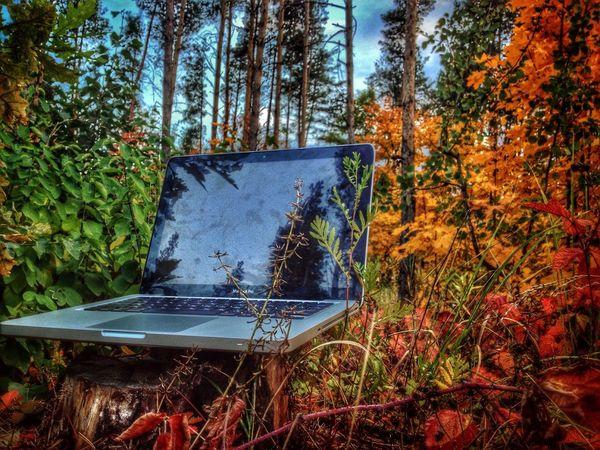 Zadonsk Autumn MacBook Apple Задонск, Лес у электроподстанции.