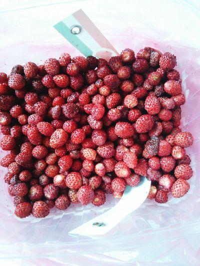 Bosnia And Herzegovina Banjaluka Fleamarket Forest Strawberries Strawberries ♡ Sweetest Thing Summer2015 Travel Photography Bosnia