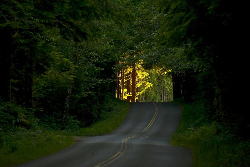 The Place of Hope - Bright, Sunny Future Ahead. Forest Road Horizontal Photography. Washington USA. Washington USA Northwestern Road Tree Plant Transportation Direction The Way Forward Sign Nature No People Forest Land Symbol Outdoors Road Marking Country Road Yellow Country Green Color Day Tranquility Dividing Line