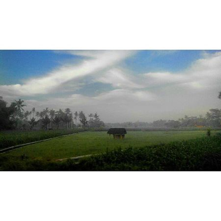 """ Tenang "" Morning Dew Morningdew Pagi Peace Ladang Nature ALaM Lestarikanalam SaveNature di Entah dimana Fajar Foto Cerita Kehidupan Keretaapi View Train Mataremaja Trip Eastjava INDONESIA Jawatimur Lenovotography photooftheday lzybstrd thejourney journey pocketphotography"
