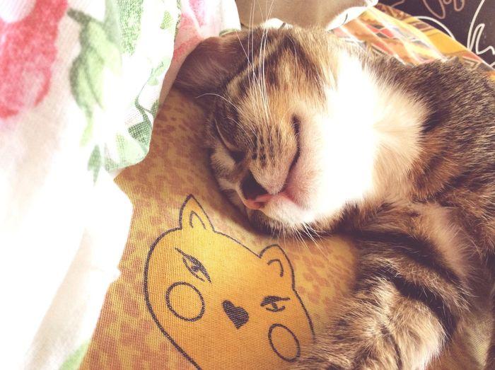Соня моя любимая кошка кошка Моя кошка