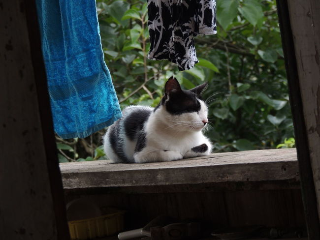 Cat Day Domestic Domestic Animals Domestic Cat Feline Focus On Foreground Mammal Nature No People One Animal Pets Relaxation Sitting Vertebrate Whisker Wood - Material