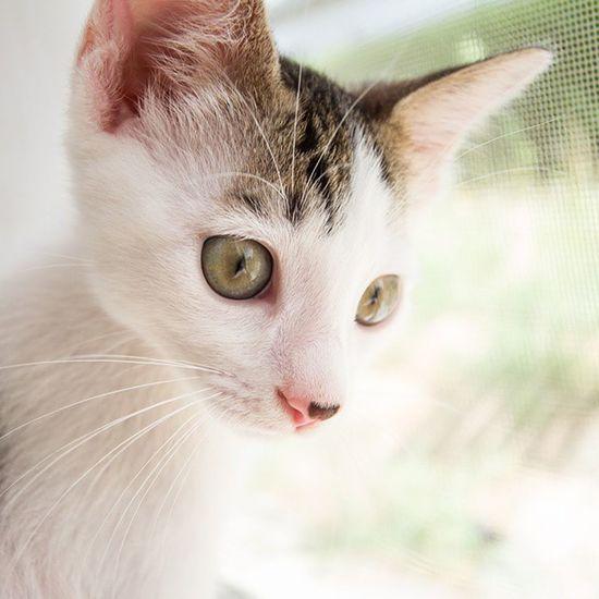But he soon started posing prettily. Kittensofinstagram Kitten Kitty Cats Catsofinstagram Cute Pet Love