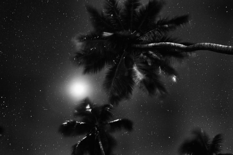 Beautyful palm