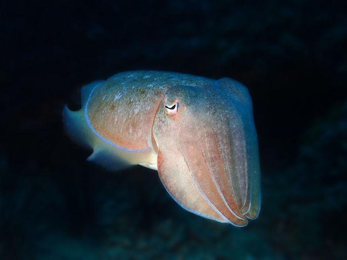 Close-up of jellyfish