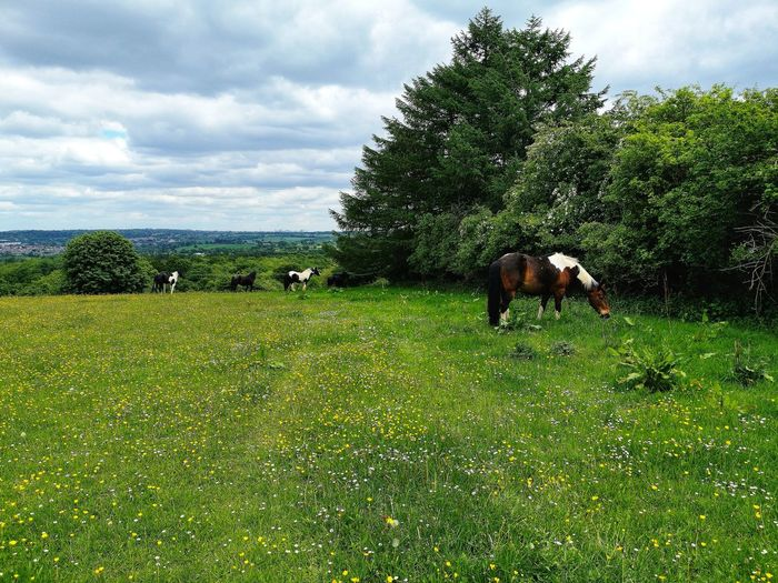 Horses in a field