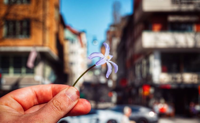Ok. One more holding a flower. But now it have to end. 2019 Niklas Storm April Human Hand City Holding Flower Close-up Architecture Sky Personal Perspective Poppy Human Finger Thumb Low Section Residential Structure Vehicle Settlement Finger My Best Photo