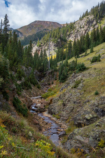 Sep 2018 Flowing Stream Gulch Rocky Mountains USA Beauty In Nature Cloud - Sky Coniferous Tree Day Environment Land Landscape Mountain Mountain Range Nature No People Outdoors Pine Tree Plant Rock Scenics - Nature Sky Tranquil Scene Tranquility Tree