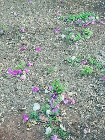 High angle view of pink flowering plant on land