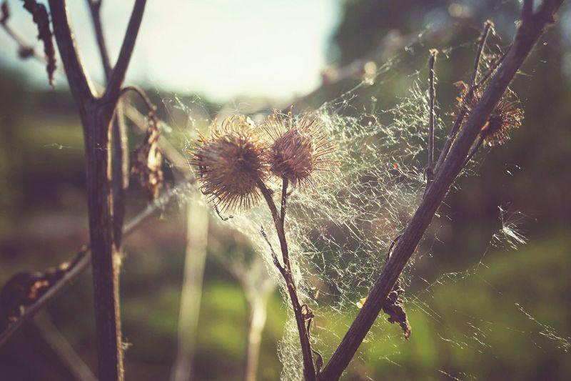 весна паутина Закат Природа растение First Eyeem Photo