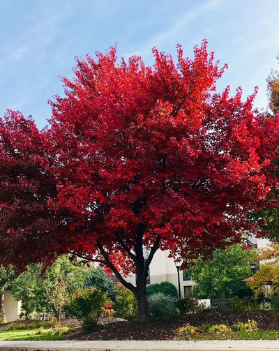Plant Sky Red Tree Growth Nature Low Angle View No People Beauty In Nature Day Branch Outdoors Freshness Land