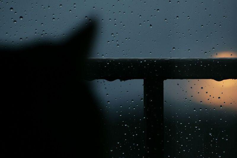 Cat Cats Rain Whenthesunpreparestodie Photography Photos Photo Photographer Rain RainyDay Waterdrop No People