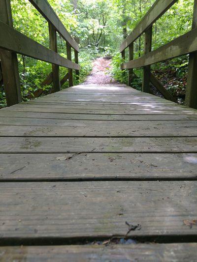 Tree Footbridge
