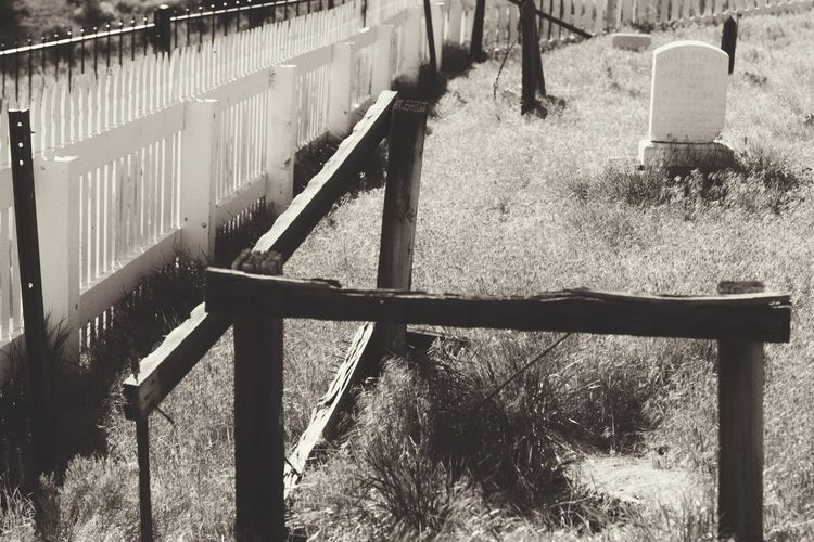 Sunlight Day Field Outdoors No People Tree Nature Animal Themes Blackandwhite Black & White By Tisa Clark Dark🌌 By Tisa Clark Dark Photography Cemetery Darkness And Light Shadows & Lights Close-up