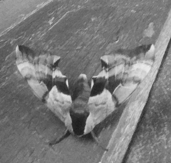 Moth Window Ledge Cool Design
