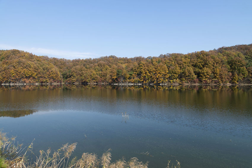 autumn landscape of Busodamak, a beautiful lake located in Okcheon, Chungbuk, South Korea Autumn Animal Themes Animals In The Wild Autumn Autumn Lake Beauty In Nature Bird Day Growth Lake Lake In Autumn Lake In The Morning Lake Reflection Morning Lake Nature No People Outdoors Reflection Scenics Sky Tranquil Scene Tranquility Tree Water