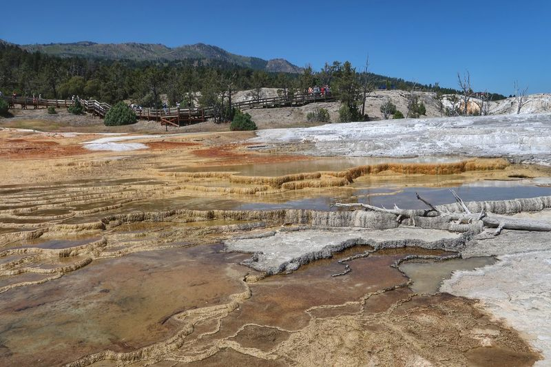 Landscape of travertine terraces at Mammoth Hot Springs in Yellowstone National Park Geyser Pool Yellowstone National Park Hot Spring Blue Sky Trees Colorful Nature Land Water Sky Nature Day Beauty In Nature Landscape Tranquility Scenics - Nature Plant Clear Sky Sunlight Tranquil Scene Environment Outdoors Tree