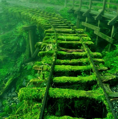 railway with green . Rice Paddy Peacock Agriculture Rural Scene Terraced Field High Angle View Water Field Green Color Landscape